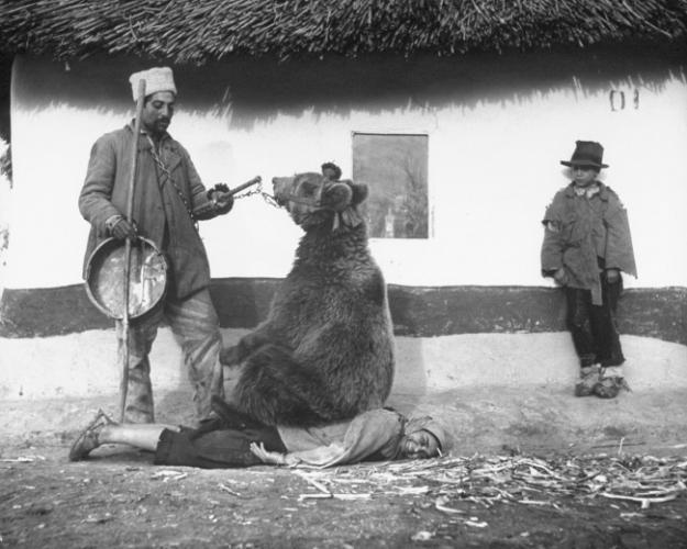 Баавгайгаар нуруугаа эмчилж байгаа нь. Румын, 1946 он.